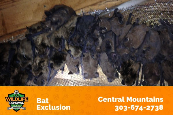 Bat Exclusion Central Mountains