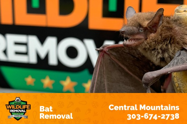 Bat Removal Central Mountains