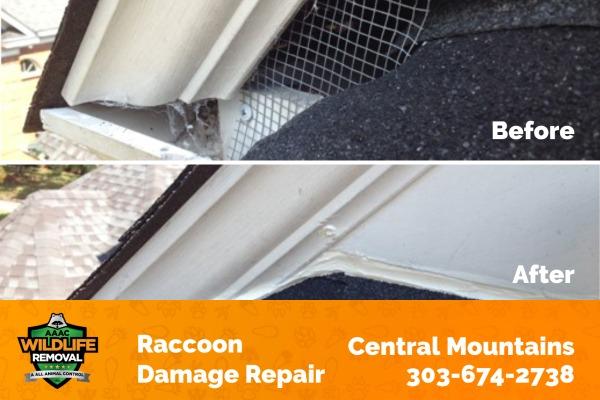 Raccoon Damage Repair Central Mountains