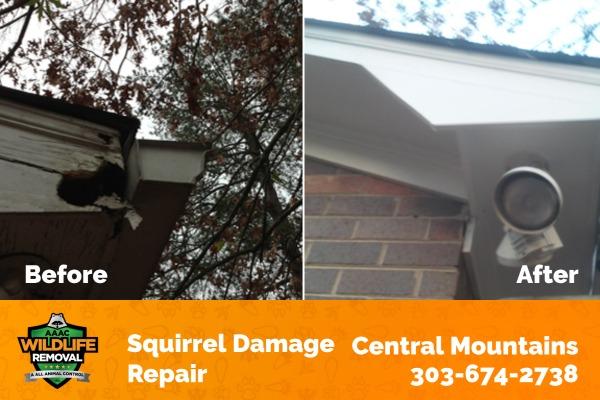 Squirrel Damage Repair Central Mountains