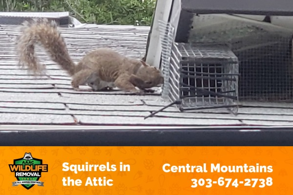 Squirrels in the Attic Central Mountains