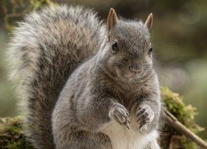 squirrel in the garden