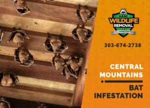 bat infestation central mountains