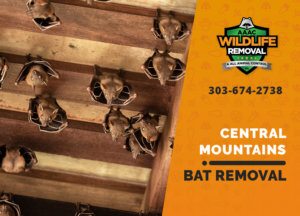 bat exclusion in central mountains
