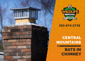 bat in chimney central mountains