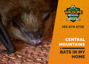 bats in my central mountains home