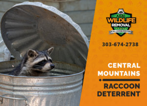 central mountains raccoon deterrents
