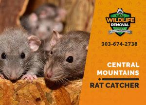 central mountains rat catcher