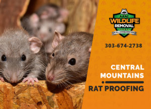 rat proofing in central mountains