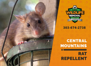 rat repellent useful central mountains