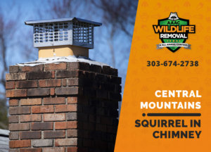 squirrel stuck in chimney central mountains