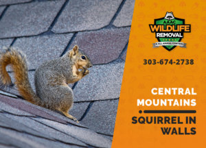 squirrel in the wall central mountains