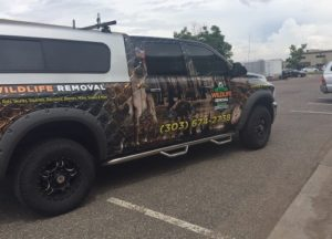 AAAC Wildlife Removal truck