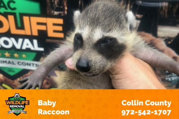 Wildlife Technician Holding a Baby Raccoon in Front of Wildlife Removal Truck