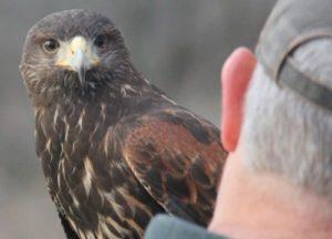 Bird looking at a man