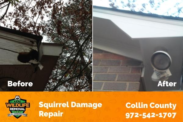 Squirrel Damage Repair Collin County