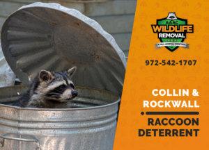 collin rockwall raccoon deterrents