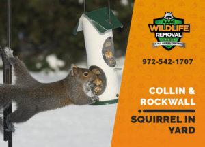 squirrel in my yard collin rockwall