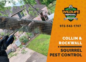 squirrel pest control in collin rockwall