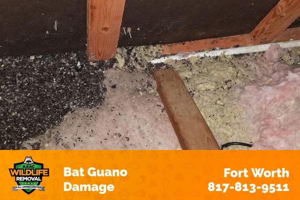 Bat Guano Damage Fort Worth