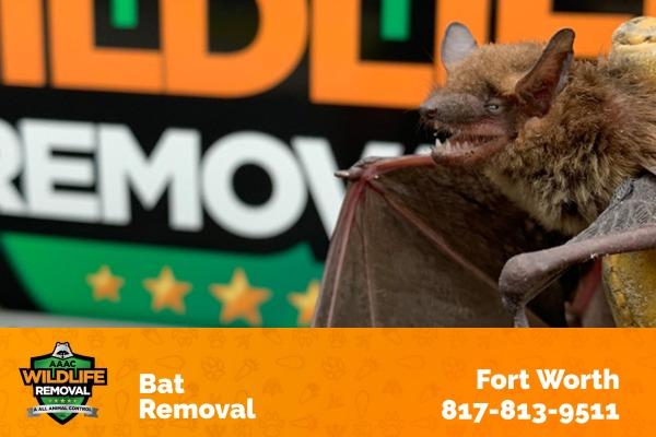 Bat Removal Fort Worth