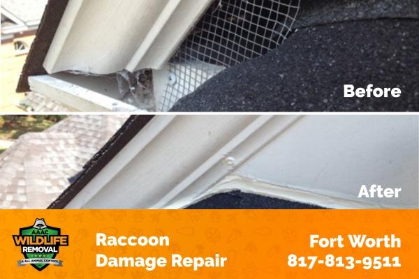 Raccoon Damage Fort Worth