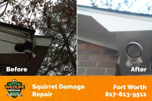 Squirrel Damage Repair Fort Worth