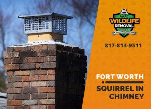 squirrel stuck in a chimney