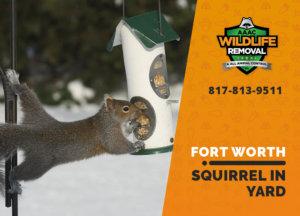 squirrel in my yard fort worth