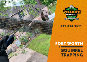 squirrel trapping program fort worth
