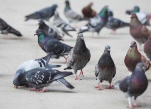 Bird on a sidewalk