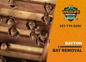 bat exclusion in dayton