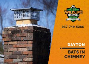 bat in chimney dayton