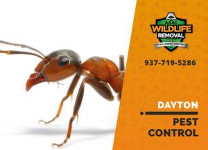 ant pest crawling on white background