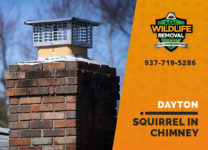 squirrel stuck in chimney dayton
