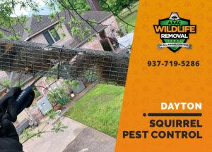 squirrel pest control in dayton