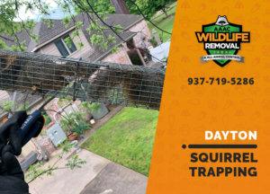 squirrel trapping program dayton