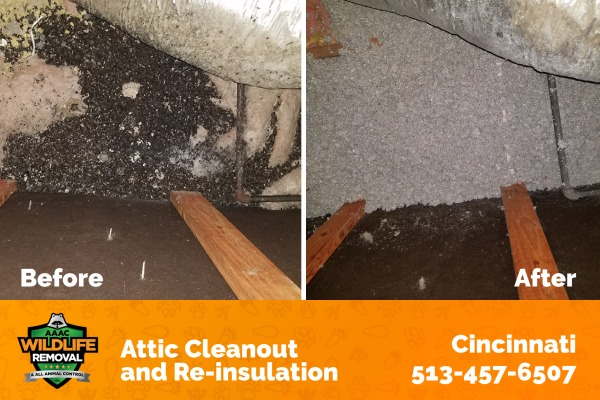 Attic Cleanout and Re-insulation Before and After