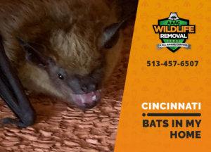 bats in my cincinnati home