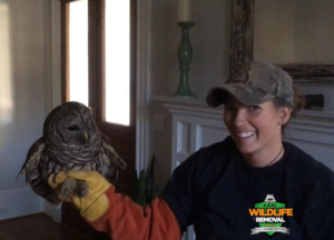 Barred owl found in Greensboro home
