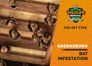 bat infestation greensboro