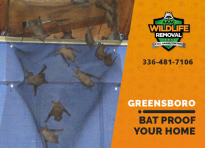 bat proofing my greensboro home