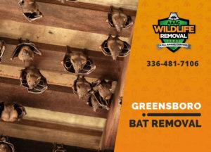 bat exclusion in greensboro
