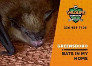 bats in my greensboro home