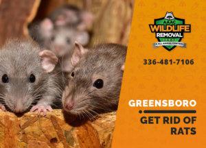 get rid of rats greensboro