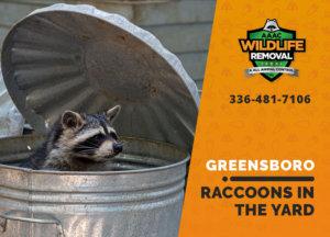 raccoons in my yard greensboro