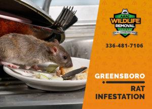 rat infestation signs greensboro