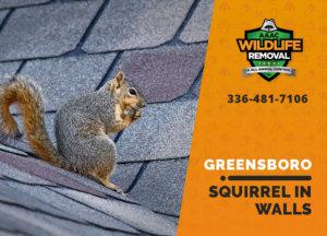 squirrel in the wall greensboro