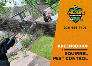 squirrel pest control in greensboro