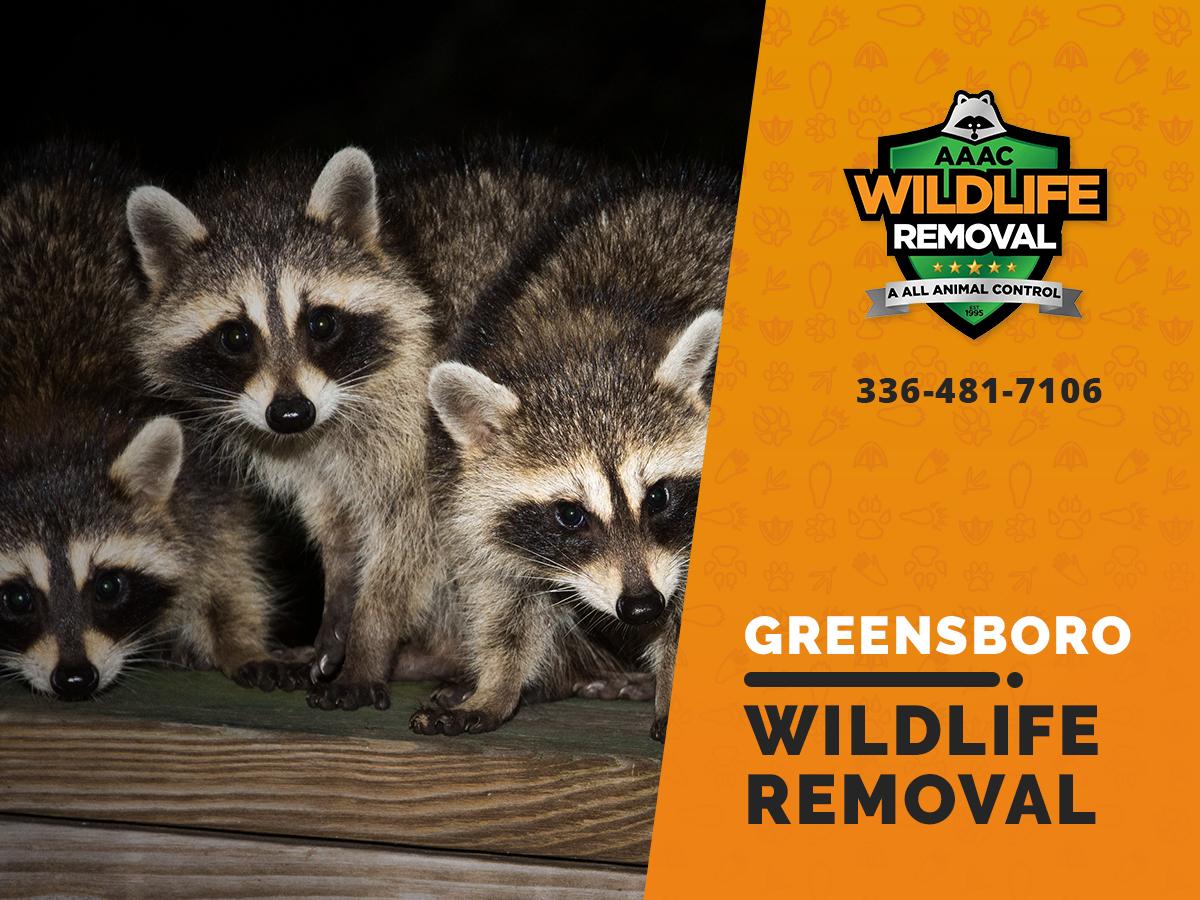 Ardmore Wildlife Removal professional removing pest animal